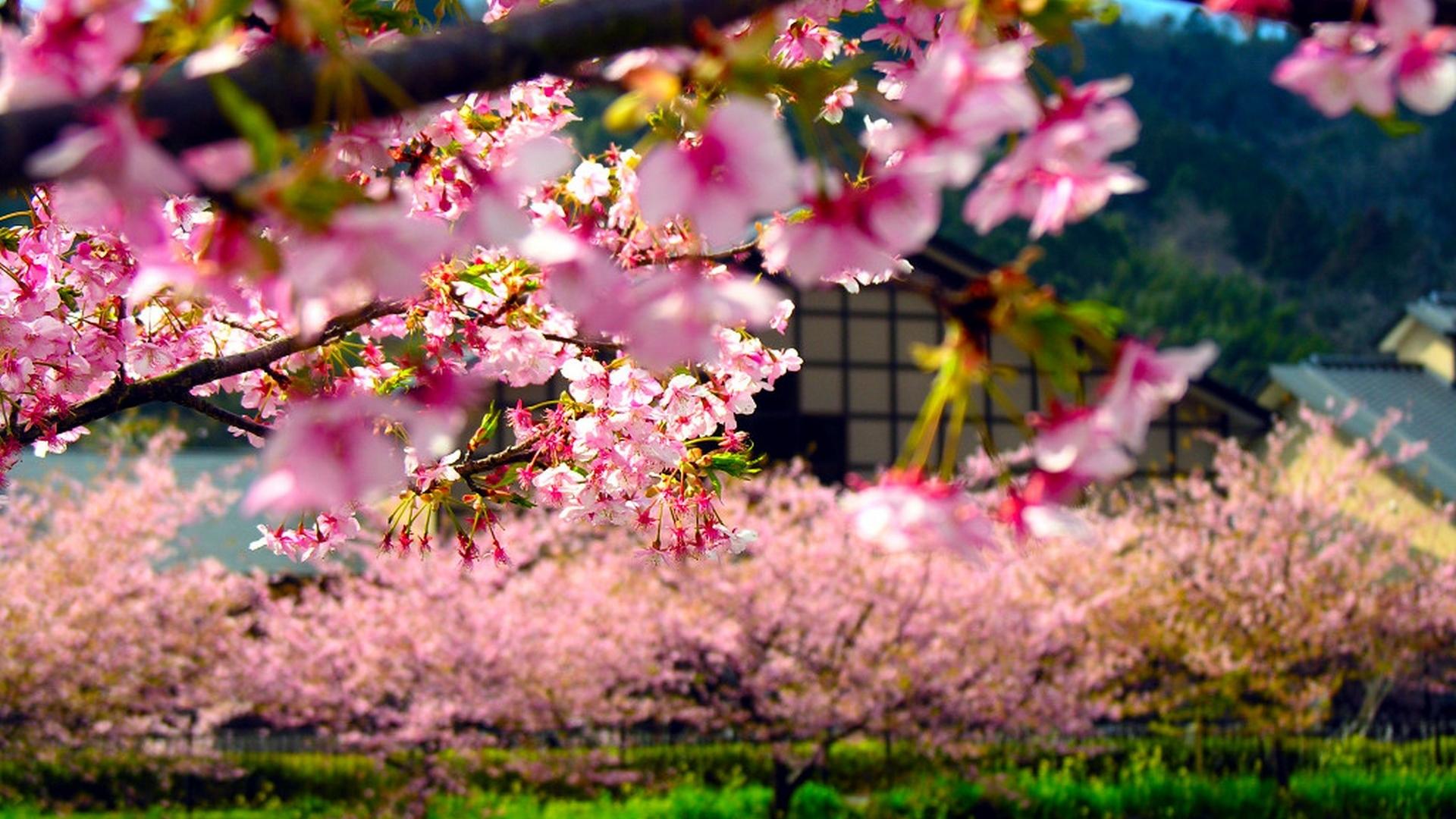 1080p-HD-Japan-Wallpapers